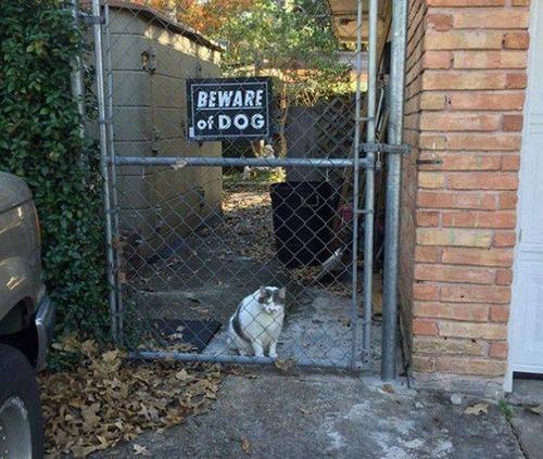 猛犬注意…と思ったら違う例07