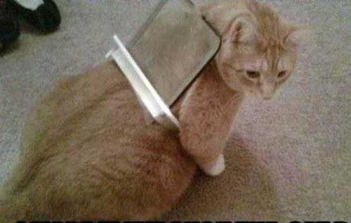 猫の謎の行動11