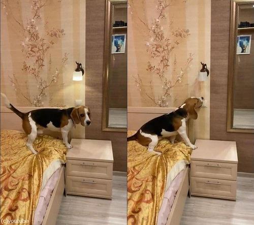 電気を消してくれる犬04