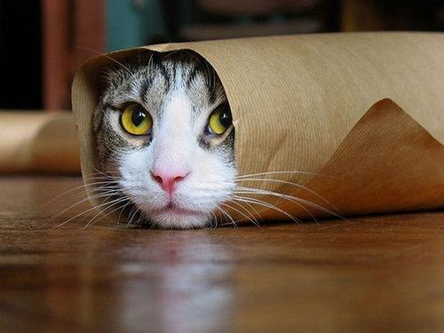 イモムシ猫09
