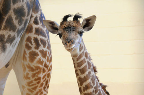 動物の赤ちゃん21