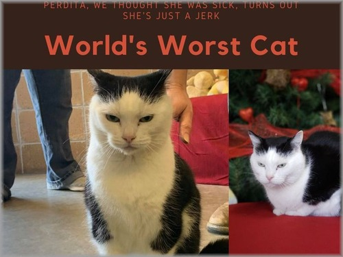 世界一悪い猫00