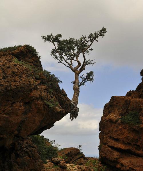 10生命力を感じる植物や木