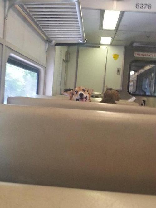 あの子が電車で見つめてくる01