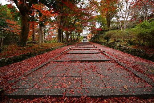 京都のレッドカーペット03