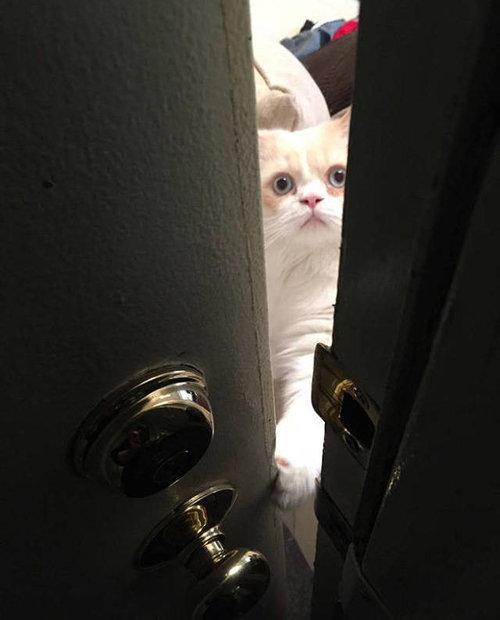 ひとりにしておけない猫03