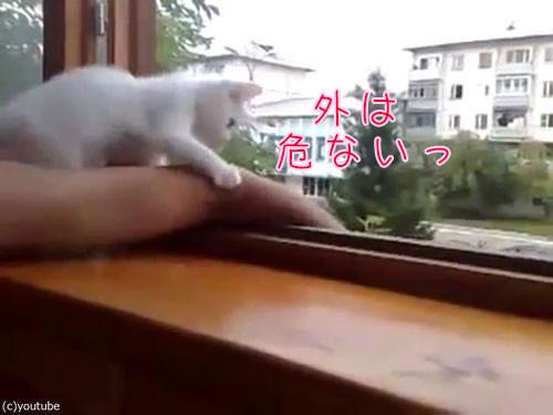 飼い主の腕を守る猫00