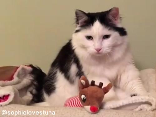 猫のソフィちゃんは毎晩こうやって寝る04