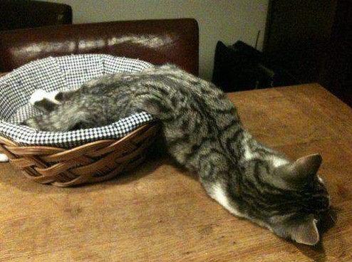 現実をくつがえしている猫02