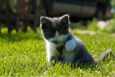 盲目の猫10