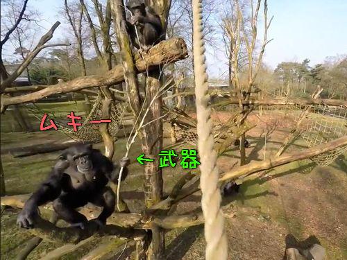 ドローンvsチンパンジー00