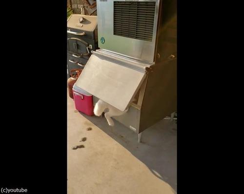 冷凍庫から何か出てる05