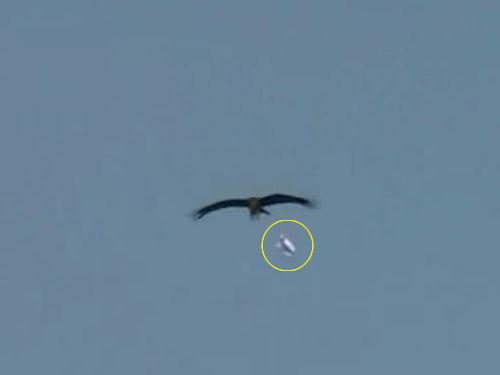 鳥が紙飛行機をキャッチ