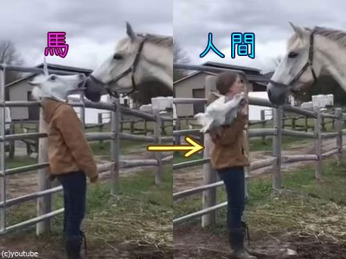 馬のマスクをとったときの馬のリアクション00