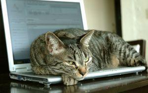パソコンの上の猫09