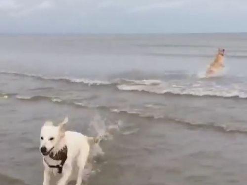 犬の水切り05