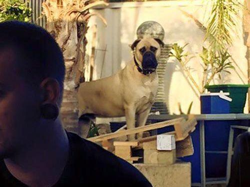 遠くからこっそり見る犬13