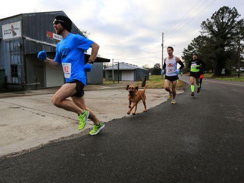 犬がハーフマラソンに飛び入り参加00