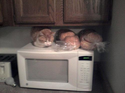 猫の「香箱座り」をパンの塊という理由03