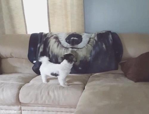ソファの上の犬が消える06