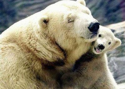 クマが釣られたり戦ったりあられもない格好したりする画像19
