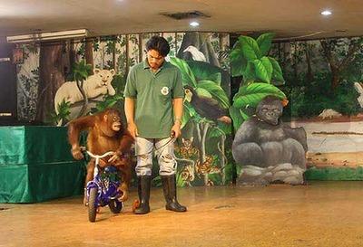 タイの動物園04