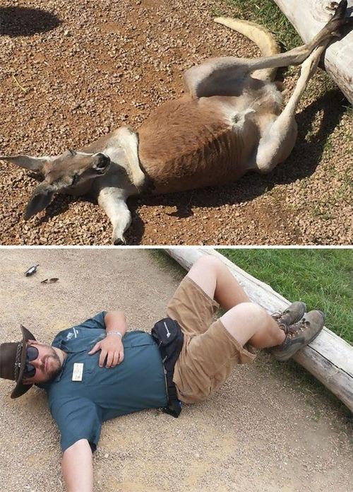 ミネソタ動物園09