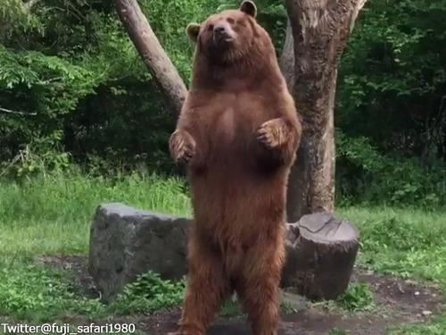ダンスするクマがかわいい00