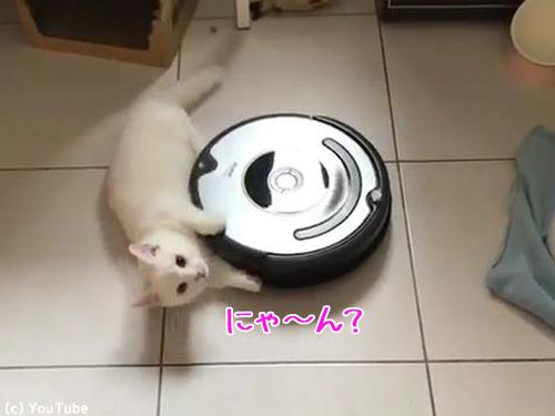 ルンバとともに回転する猫00