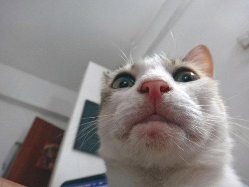 猫の自撮り05