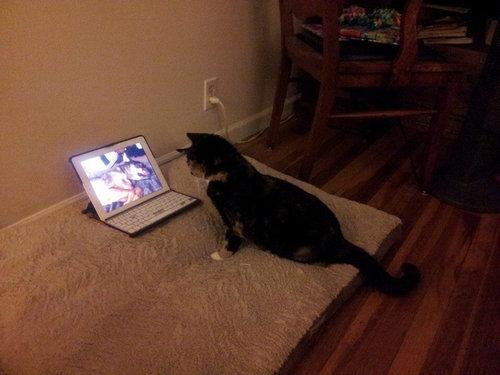 最愛の犬を亡くした猫がとった行動07