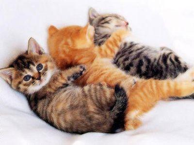 こっち見んな猫