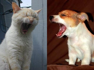 あくび猫と犬