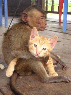 猿と猫の仲03