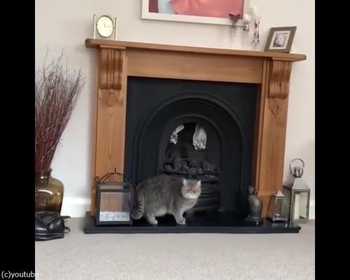 猫、暖炉に上ろうとするも失敗04
