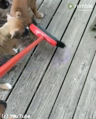 お掃除を手伝う子犬たち01