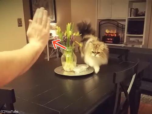 ハイタッチしてくれる猫様00