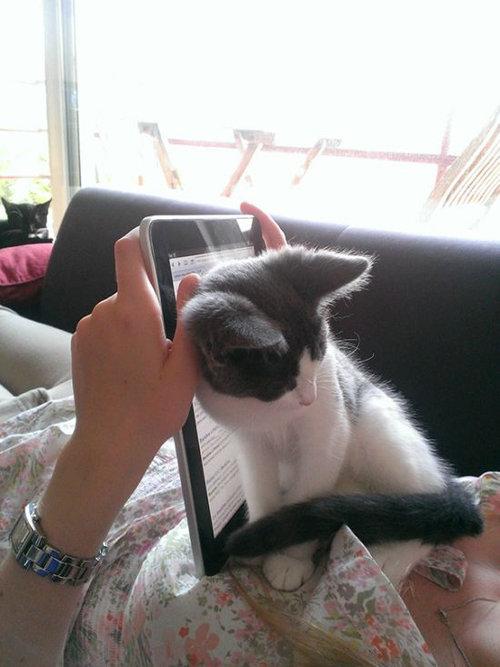 猫に生活を脅かされる21