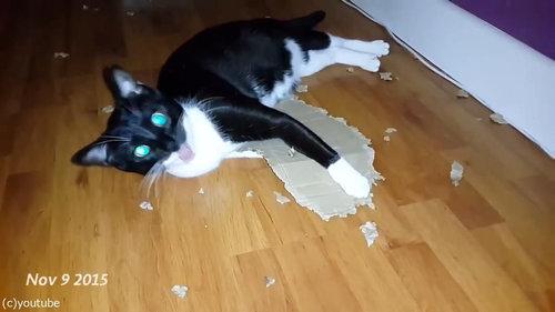ダンボールをぼこぼこに粉砕する猫06