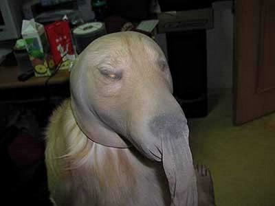 酷い犬のコスプレ03