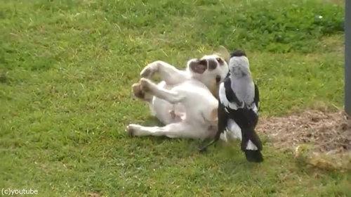 鳥と犬は親友になりうる04
