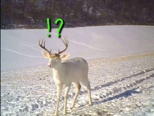 鹿が驚いた理由00