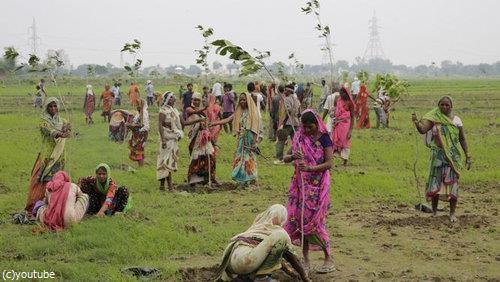 インド、5000万本の木をたった24時間で植える01