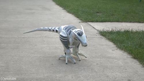 ロボ恐竜に戦いを挑む子犬たち01