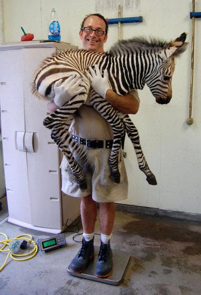 動物の体重の測り方12