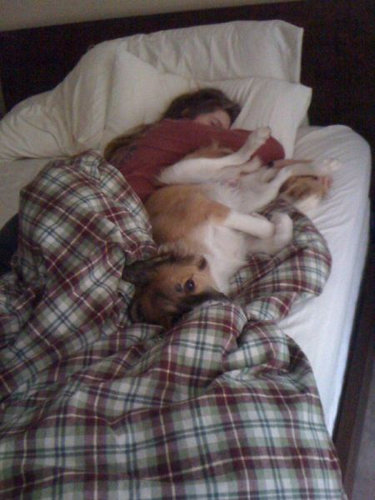 犬と一緒に寝ると04
