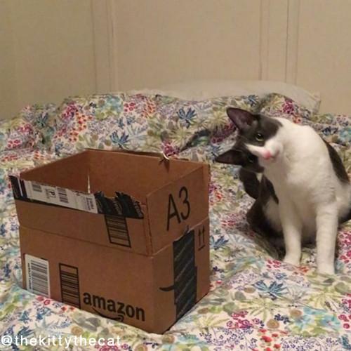 やっぱり猫は箱が好き01