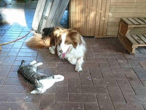 帰宅したら…見知らぬ猫がいる04