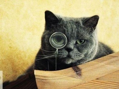 メガネ猫07