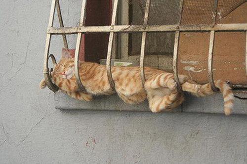猫の寝方15